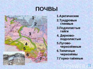 ПОЧВЫ1.Арктические2.Тундровые глеевые3.Подзолистые тайги4. Дерново-подзолистые5.