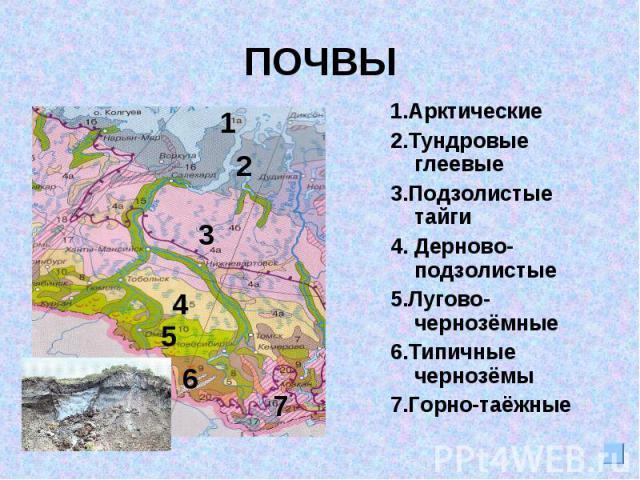 ПОЧВЫ1.Арктические2.Тундровые глеевые3.Подзолистые тайги4. Дерново-подзолистые5.Лугово-чернозёмные 6.Типичные чернозёмы7.Горно-таёжные