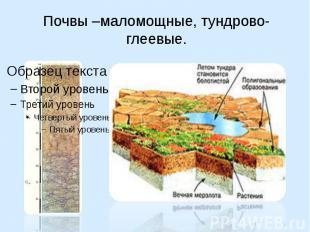 Почвы –маломощные, тундрово-глеевые.