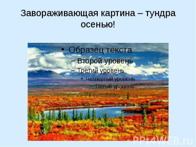 Завораживающая картина – тундра осенью!