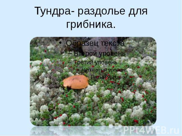 Тундра- раздолье для грибника.