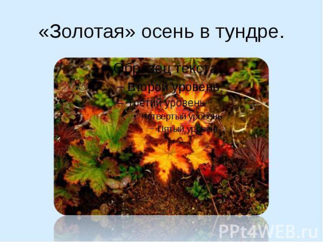 «Золотая» осень в тундре.