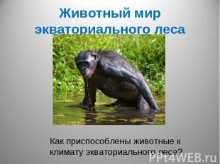 Животный мир экваториального лесаКак приспособлены животные к климату экваториал
