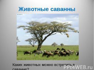 Животные саванныКаких животных можно встретить в саванне?