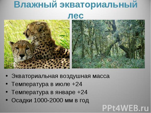 Влажный экваториальный лесЭкваториальная воздушная массаТемпература в июле +24Температура в январе +24Осадки 1000-2000 мм в год