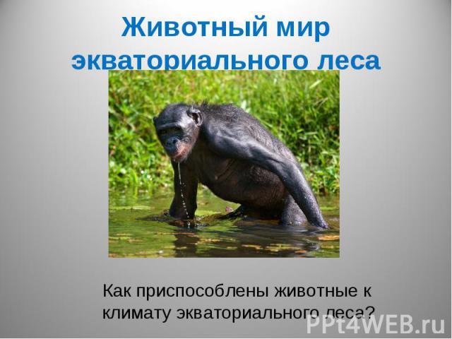 Животный мир экваториального лесаКак приспособлены животные к климату экваториального леса?