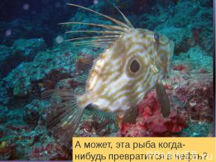 А может, эта рыба когда-нибудь превратится в нефть?