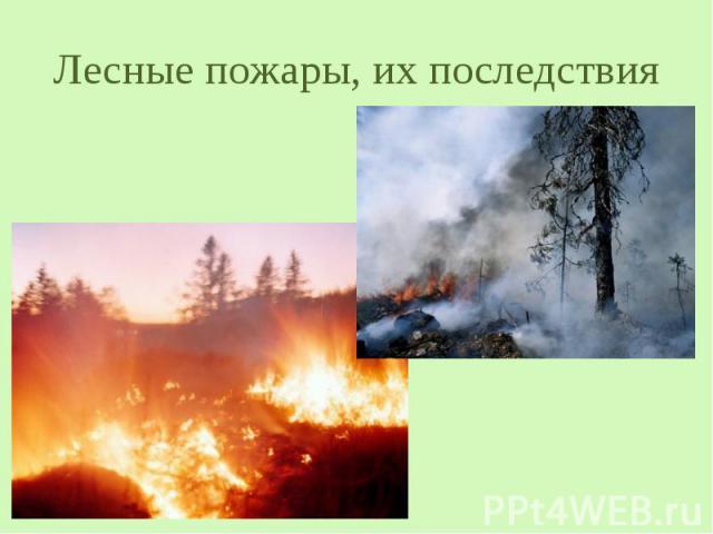 Лесные пожары, их последствия