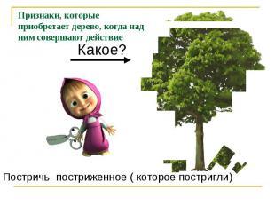 Признаки, которые приобретает дерево, когда над ним совершают действиеПостричь-