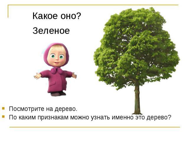 Какое оно?ЗеленоеПосмотрите на дерево.По каким признакам можно узнать именно это дерево?