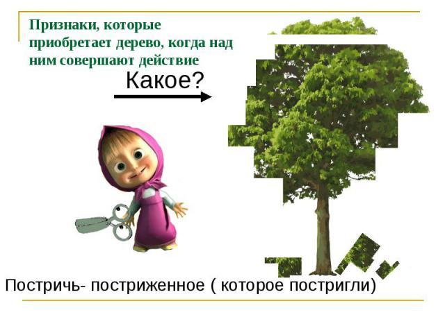 Признаки, которые приобретает дерево, когда над ним совершают действиеПостричь- постриженное ( которое постригли)