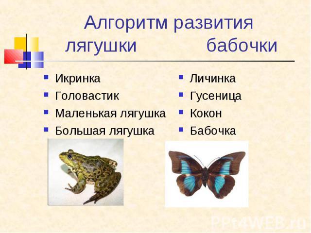 Алгоритм развития лягушки бабочкиИкринкаГоловастикМаленькая лягушкаБольшая лягушкаЛичинкаГусеницаКоконБабочка