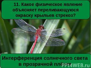11. Какое физическое явление объясняет переливающуюся окраску крыльев стрекоз?Ин