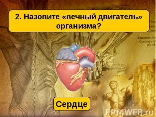 2. Назовите «вечный двигатель» организма?