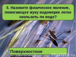 5. Назовите физическое явление, помогающее жуку водомерке легко скользить по вод