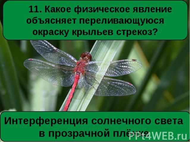11. Какое физическое явление объясняет переливающуюся окраску крыльев стрекоз?Интерференция солнечного света в прозрачной плёнке