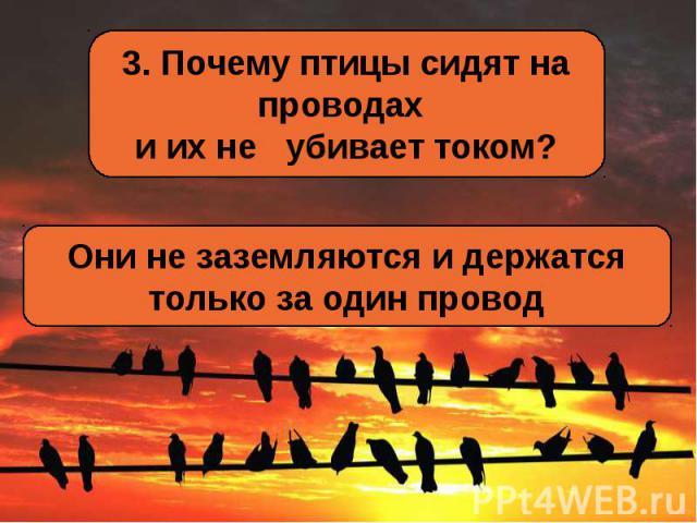 3. Почему птицы сидят на проводах и их не убивает током?Они не заземляются и держатся только за один провод