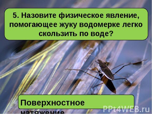 5. Назовите физическое явление, помогающее жуку водомерке легко скользить по воде?Поверхностное натяжение