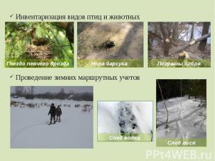 Инвентаризация видов птиц и животных Проведение зимних маршрутных учетов
