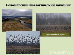 Беломорский биологический заказник