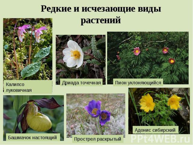 Редкие и исчезающие виды растений