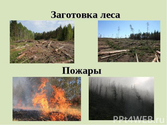 Заготовка лесаПожары