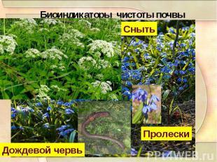 Биоиндикаторы чистоты почвы
