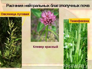 Растения нейтральных благополучных почв