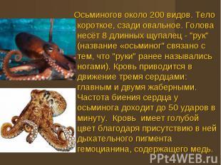 Осьминогов около 200 видов. Тело короткое, сзади овальное. Голова несёт 8 длинны