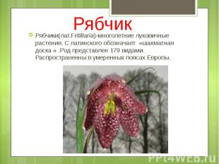 Рябчик Рябчики(лат.Fritillaria)-многолетние луковичные растения. С латинского об