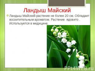 Ландыш Майский Ландыш Майский-растение не более 20 см. Обладает восхитительным а