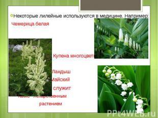 Некоторые лилейные используются в медицине. Например: Чемерица белая Купена мног