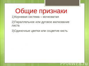 Общие признаки 1)Корневая система – мочковатая 2)Параллельное или дуговое жилков