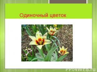 Одиночный цветок