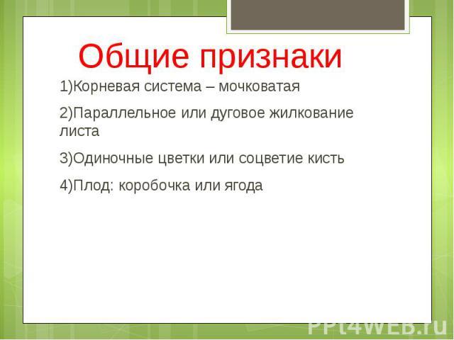 Общие признаки 1)Корневая система – мочковатая 2)Параллельное или дуговое жилкование листа 3)Одиночные цветки или соцветие кисть 4)Плод: коробочка или ягода