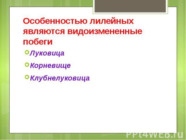 Особенностью лилейных являются видоизмененные побеги Луковица Корневище Клубнелуковица