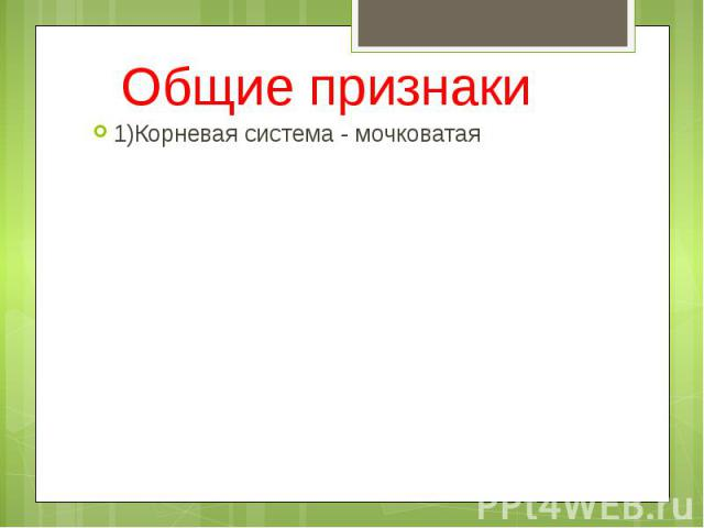Общие признаки 1)Корневая система - мочковатая