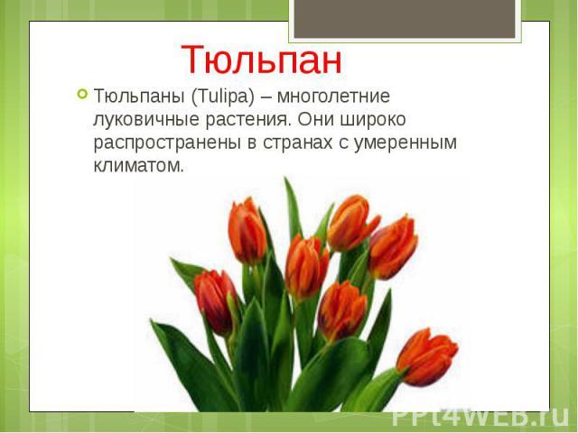 Тюльпан Тюльпаны (Tulipa) – многолетние луковичные растения. Они широко распространены в странах с умеренным климатом.