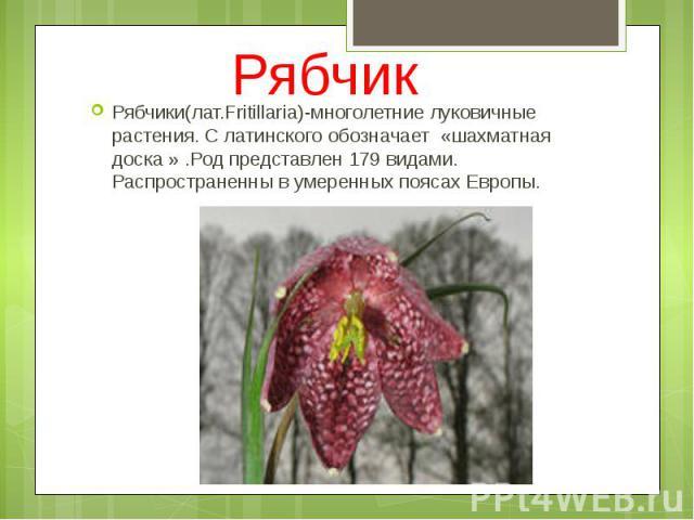 Рябчик Рябчики(лат.Fritillaria)-многолетние луковичные растения. С латинского обозначает «шахматная доска » .Род представлен 179 видами. Распространенны в умеренных поясах Европы.