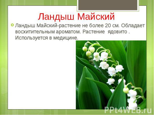 Ландыш Майский Ландыш Майский-растение не более 20 см. Обладает восхитительным ароматом. Растение ядовито . Используется в медицине.