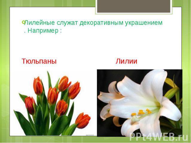 Лилейные служат декоративным украшением . Например : Тюльпаны Лилии
