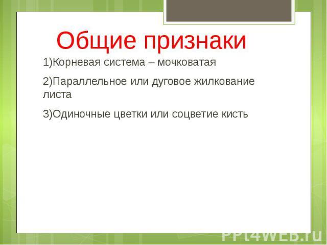 Общие признаки 1)Корневая система – мочковатая 2)Параллельное или дуговое жилкование листа 3)Одиночные цветки или соцветие кисть