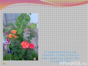 В своей презентации я хочу рассказать о цветах, которые я вижу каждый год с ранн