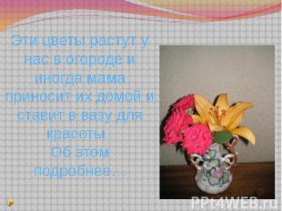 Эти цветы растут у нас в огороде и иногда мама приносит их домой и ставит в вазу