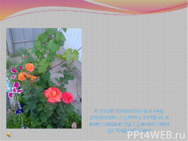 В своей презентации я хочу рассказать о цветах, которые я вижу каждый год с раннего лета до поздней осени