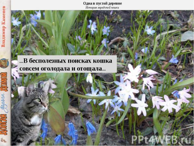 …В бесполезных поисках кошка совсем оголодала и отощала…