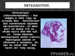 Питекантроп (обезьяночеловек) – был найден в 1891 году на острове Ява. Питекантр