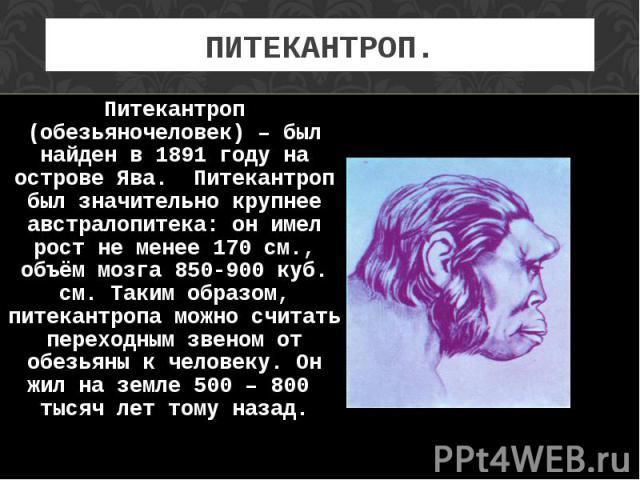 Питекантроп (обезьяночеловек) – был найден в 1891 году на острове Ява. Питекантроп был значительно крупнее австралопитека: он имел рост не менее 170 см., объём мозга 850-900 куб. см. Таким образом, питекантропа можно считать переходным звеном от обе…