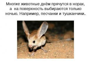 Многие животные днём прячутся в норах, а на поверхность выбираются только ночью.