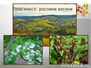 Трав'янисті рослини восени